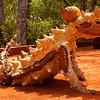 Giant Lizard Statue - Canberra Botanical Gardens