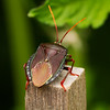 Beautiful armour on this insect!!!