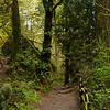 The pathway to Witch's Castle, Forest Park Portland Oregon