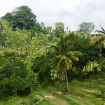 Bali jungle