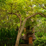 Bali gardens