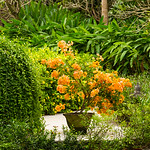 Bali Garden resort