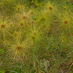 Unusual grasses growing on Bali beaches