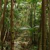 Fraser Island Queensland Australia