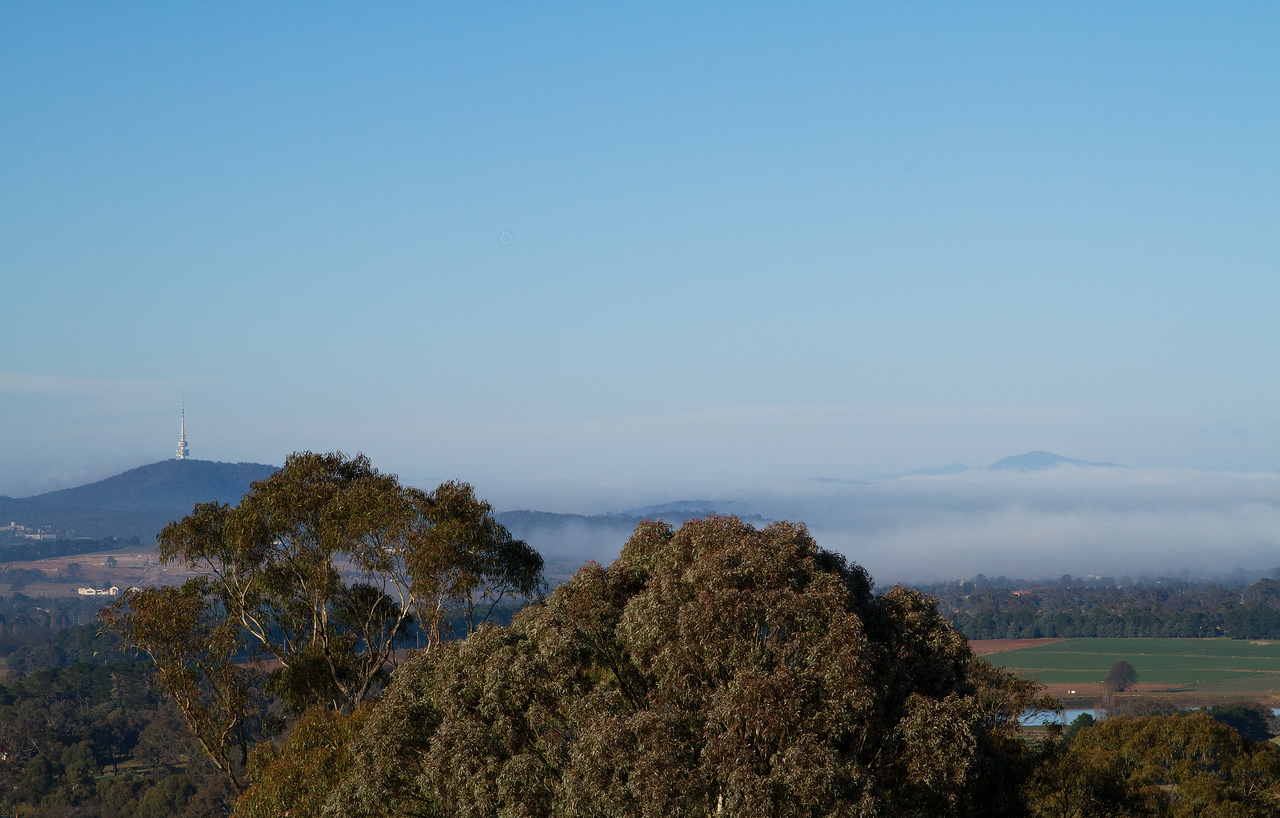 Foggy winters morning, Canberra