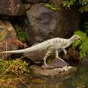 Atlas capcosarus Dinosaur
