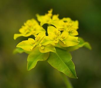 Yellow & Green Flower
