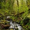 Forest Park, Portland Oregon