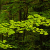 Leaves on a tree